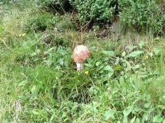 2014-08-02_wunden4